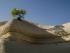 Cappadocia - big or small tree??