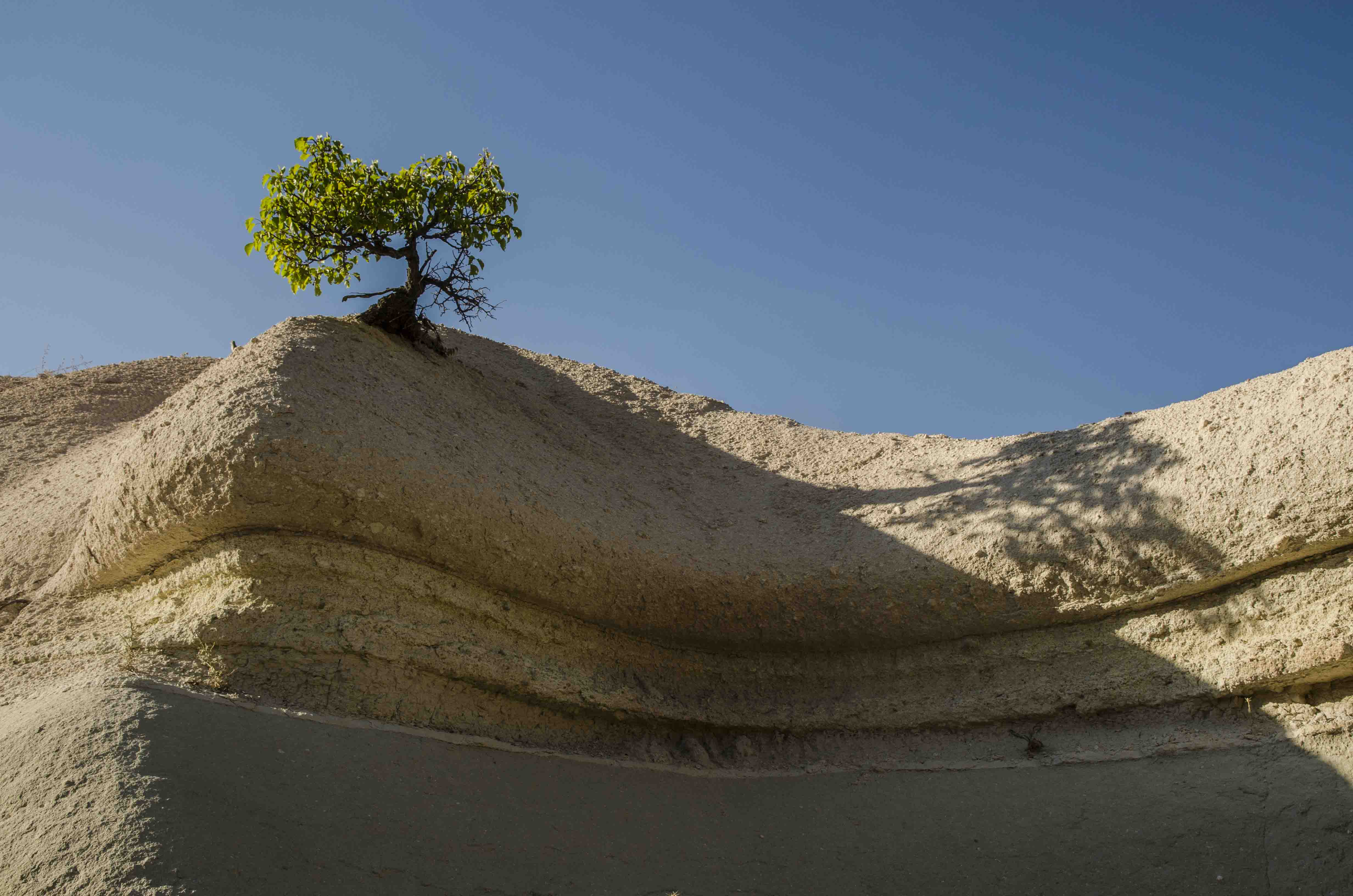 Cappadocia - big or small tree??